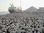 فسح أكثر من مليون رأس من الماشية في موسم الحج عبر ميناء جدة - المواطن