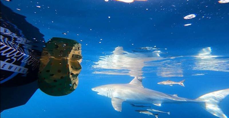 قلب من حديد رجل يداعب سمكة قرش عملاقة (1)